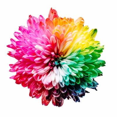 Kleurgebruik in je tuin